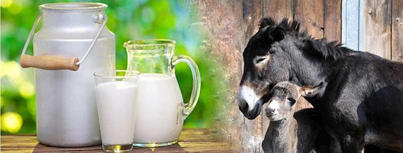 فایده شیر الاغ