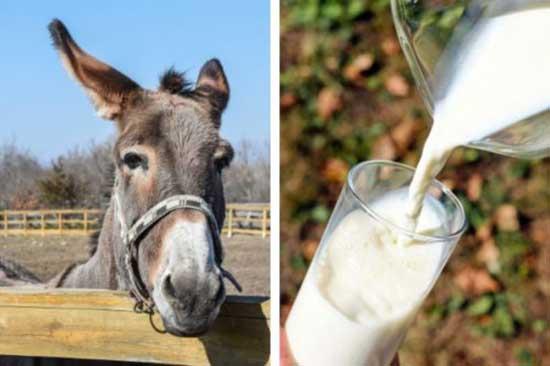 فواید شیر خر