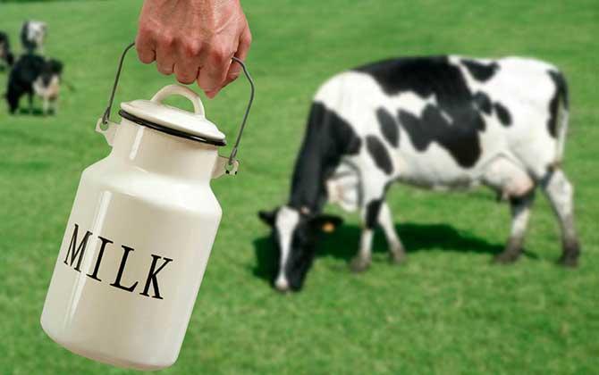 تاثیر هورمون بر شیر گاو