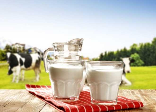 راه بالا بردن میزان شیر گاو